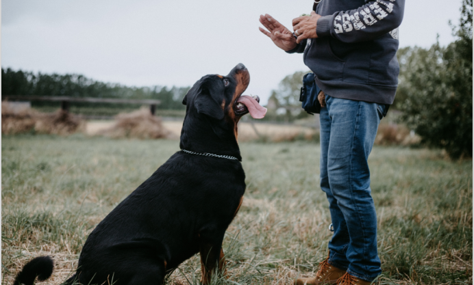 Most Common Dog Behaviors - Check Out the Problems & Solution To Them Here