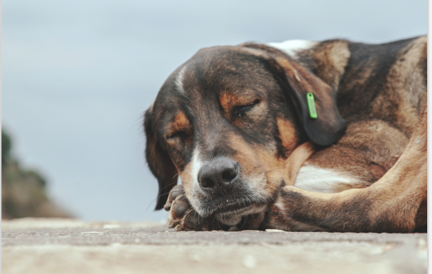 Why Does Street Dogs Howl At Night? - Reasons Enlisted Here