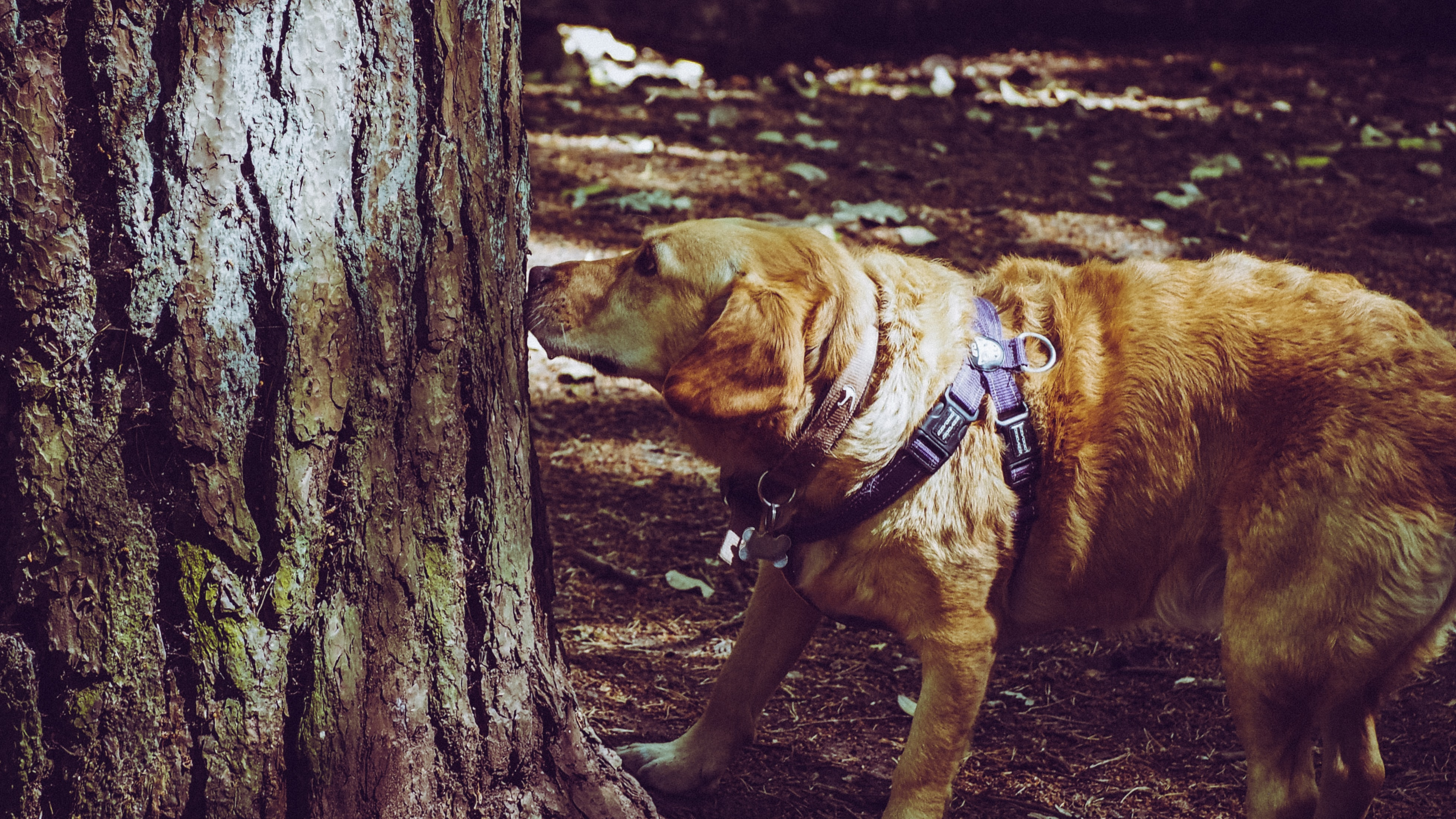 Can Dogs See Things Which Humans Can't? - Check Out Here