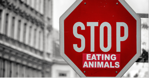 Top Reasons Why You Should Stop Eating Meat - Save Animals & Planet