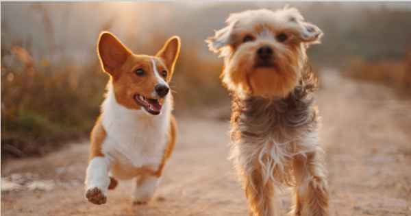 A Dog Brain in Comparison To Human Brain - Decoding Your Furry Friend 's Mind